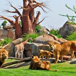 21st century zoos