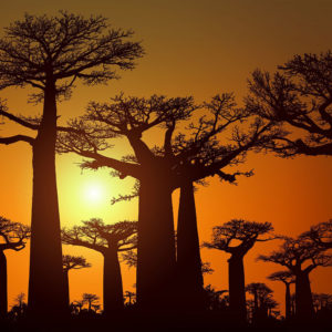 Madagascar, a developing tourist destination