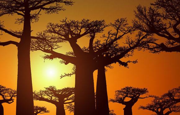 Madagascar, a developing tourist destination